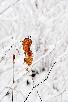 Fotografie - Zima I - 8971958_