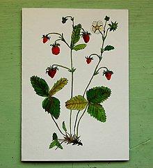 Kresby - lesná jahoda - 8974818_