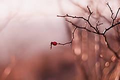 Fotografie - osamelá šípka - 8990009_