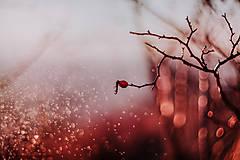 Fotografie - osamelá šípka a bublinky (Červená) - 8990040_
