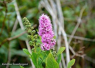 Fotografie - Květ, kam se podíváš....fotografie - 8990822_