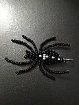 Korálkový pavúk