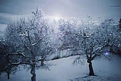 Fotografie - stromy 7_tree - 8996623_