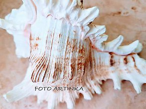 Fotografie - FOTO - mušľa - 9042304_