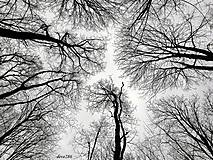 Fotografie - Labyrint - 9068534_