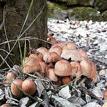 Fotografie - 5 x momentka z prírody (Rodinka) - 9073701_
