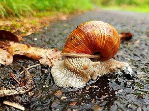 Fotografie - 5 x momentka z prírody (Cestovateľ) - 9073703_