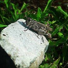 Fotografie - 5 x momentka z prírody (Slnečný koník) - 9073710_