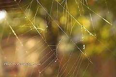 Fotografie - pavučina v zlatých odleskoch slnka  - 9086784_