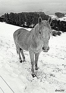 Fotografie - Koník od Princezničky - 9090593_