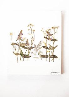 """Obrázky - Obraz Herbarium """"šalvia"""" - 9096945_"""