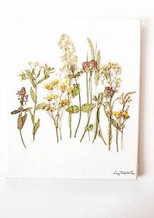 "Obrázky - Obraz Herbarium ""ďatelina"" - 9096979_"