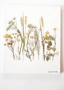 Obrázky - Obraz Herbarium