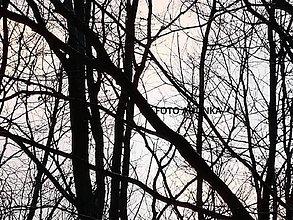 Fotografie - Fotografia - príroda - 9103931_