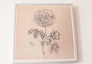 Obrazy - Obraz - grafika 32x32cm s rámom (Rosa) - 9102754_