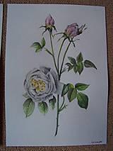 Obrazy - Maľba : Ruže - 9103507_