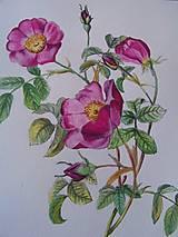 Obrazy - Maľba : Ruže - 9103513_