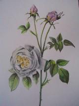 Obrazy - Maľba : Ruže - 9103517_