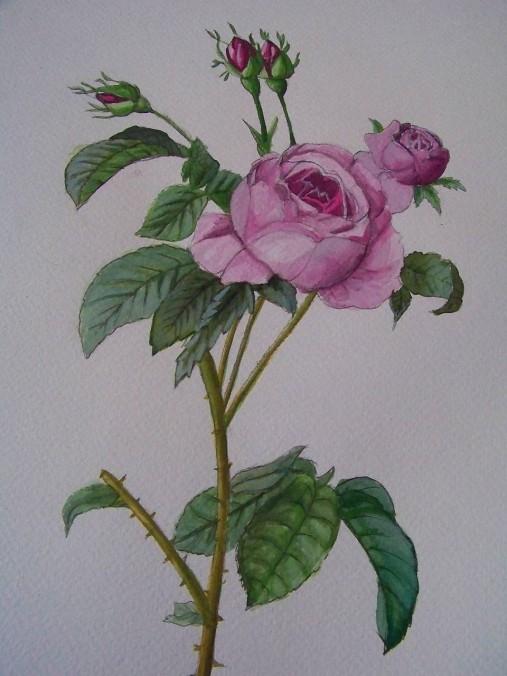 Maľba : Ruže