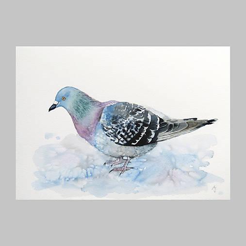Holub - originál, akvarel