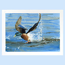 Obrazy - Start - originál, akvarel - 9120559_