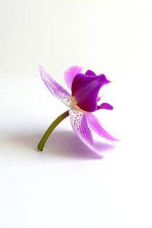 Fotografie - Orchidea - 9130574_