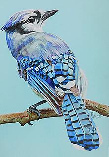 "Kresby - Farebná kresba ""Cyanocitta cristata - Sojka modrá"" - 9139654_"