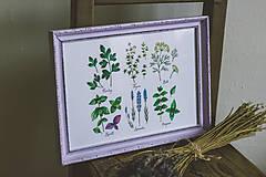 Obrázky - Bylinky (Bylinky vo fialovom ráme (1ks)) - 9145295_