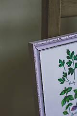 Obrázky - Bylinky (Bylinky vo fialovom ráme (1ks)) - 9145302_