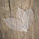 Preparované listy Prírodné béžové