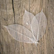 Suroviny - Preparované listy Prírodné béžové - 9152940_