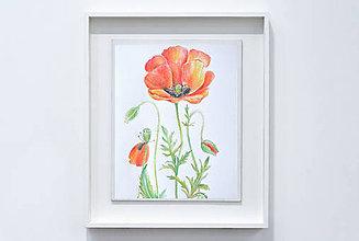 Kresby - Botanická kresba rastliny - Vlčí mak - 9161791_