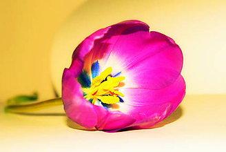 Fotografie - Tulipán - 9185090_