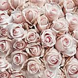 - ružičky - 9207274_