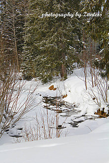 Fotografie - Autorská fotografia: Horský potok - 9225703_