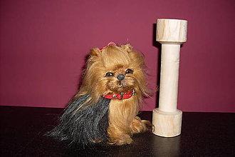 Pre zvieratká - drevený aport - 9227117_