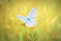 Fotografie - Na krídlach motýľa - 9233889_