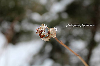 Fotografie - Autorská fotografia: Pocukrované mrazom - 9233330_