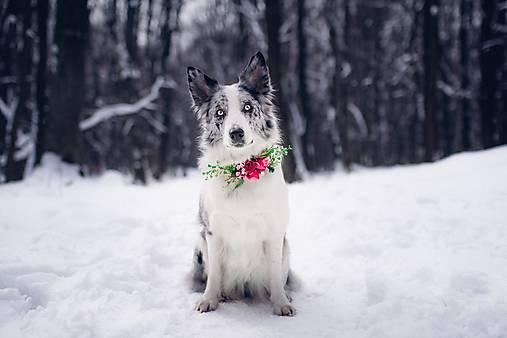 """Obojok pre psíka """"ružová záhrada"""""""