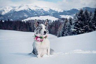 """Pre zvieratká - Obojok pre psíka na stuhe """"v lupeňoch"""" - 9241041_"""