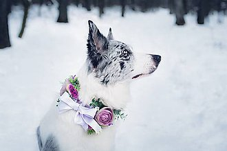 """Pre zvieratká - Obojok pre psíka na stuhe """"kvetinové opojenie"""" - 9241067_"""