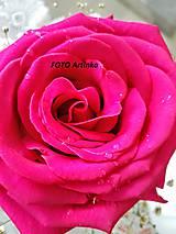 Foto- rose