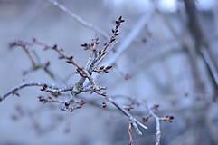 Fotografie - V rozpuku - 9278370_