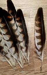 - Prírodné perie  - 9274662_