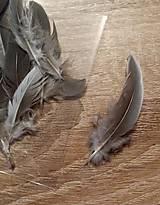 Iný materiál - Prírodné perie  - 9274796_