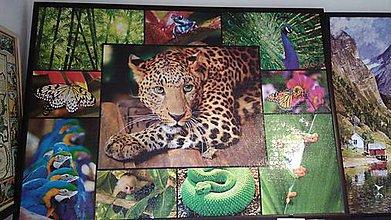 Obrázky - Puzzle obraz V džungli - 9280623_