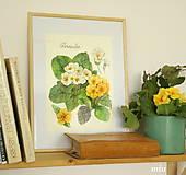 - Maľovaný obraz Primula, akvarel, tlač A4 - 9291402_