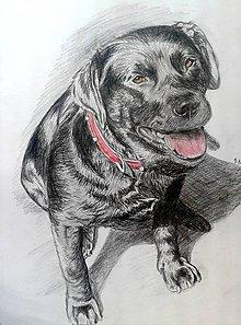 Kresby - najlepší priateľ človeka... :-) - 9295522_