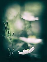 Fotografie - Čaro kvetu - 3. - 9302068_