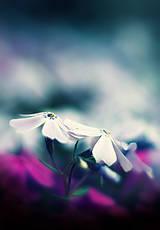 Fotografie - Čaro kvetu - 6. - 9302108_